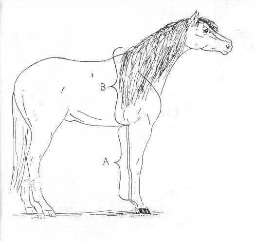 Foal height estimation